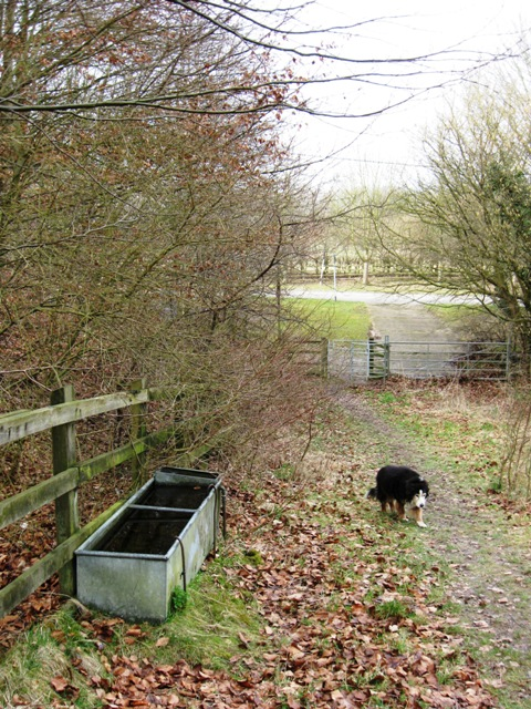 Water trough by a footpath off Duckmore Lane, Tring