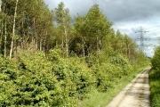 Woodland Alongside A50