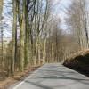 Tree-lined road through St Gwynno Forest