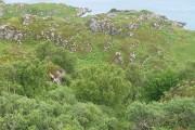 Wooded slopes, Carn Mòr