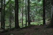 Arboretum, Eilean Shona