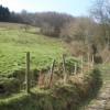 Woodland path, above Abercwmboi