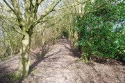 Footpath through the woods near Hartley Mauditt