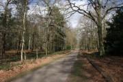 Track through Hardwick Wood, Clumber Park