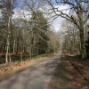 Track through Hardwick Wood, Clumber Park
