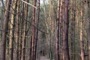 Woodland near Bassetts