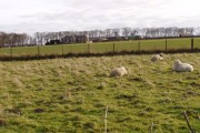 East  Leys Farmland