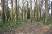 Path through some woodland