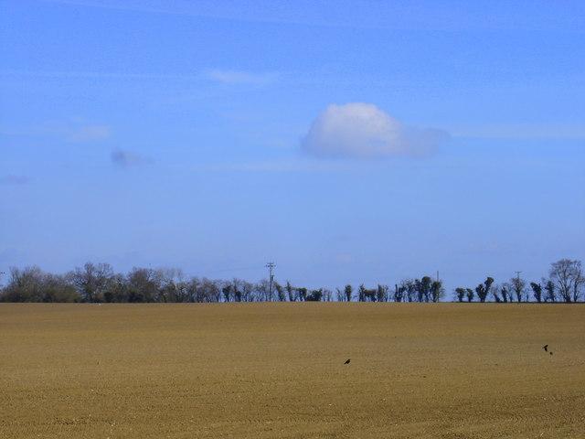 A Suffolk field
