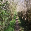 Footpath with blossom