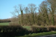 Hedgerow and Woodland