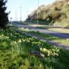Daffodils, Dartmouth Road, Three Beaches, Paignton