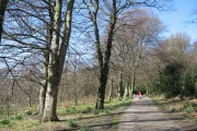 Spring in Woolton Woods