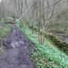 Footpath in Cressbrook Dale