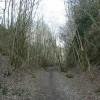 Railway cutting, Buckland Hollow