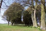 Avenue of trees near Radley College