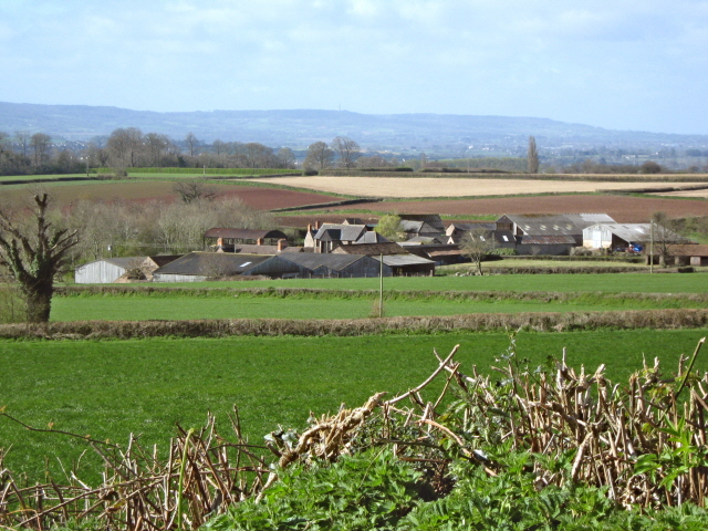 Upper Cheddon from Pitcher's Hill