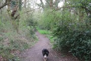 A Path through the Woodland on Bookham Common