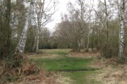 Silver Birch Woodland on Bookham Common