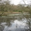 The Third Pond from the West, Bookham Common