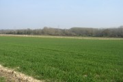 Lodge Farm - spring crop