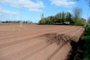 Potato field near Bromsash 2