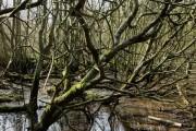 Swampy Ground