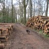 Harvested logs waiting for collection in Pavis Wood