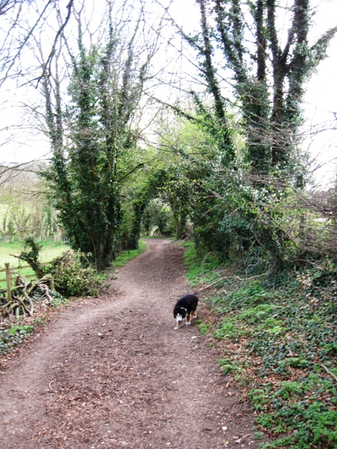 Along the County Boundary Bridleway near Tring