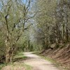 Path through King's Cliff Wood, North Petherton