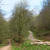 Paths through King's Cliff Wood, North Petherton