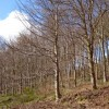 Trees in King's Cliff Wood, North Petherton