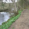 River Derwent at Coppice Wood