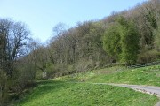 Wooded side of Dinmore Hill