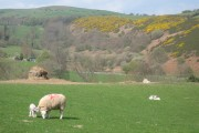 Spring on The Clwydian Way