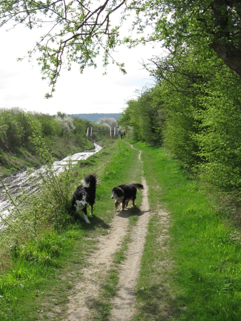 Wendover Arm: The Disused Canal and Towpath near Little Tring