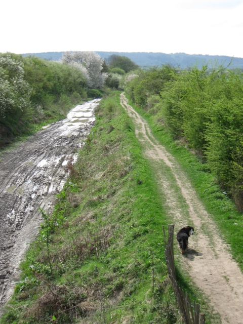 Wendover Arm: The Canal Bed looking towards Drayton Beauchamp