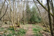 Footpath through Beckington Wood