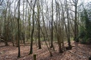 Kemp's Wood