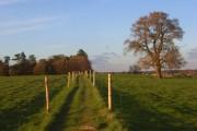 Footpath in pasture, Arborfield
