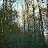 Thorphill Wood