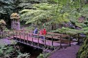 Bridge in Reelig Glen