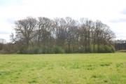 Small woodland near Bough Beech Dam