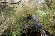 The Nant Pibwr north of Cwmffrwd