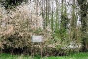Danger Deep Bog at Halton