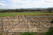 Ruts in the Field