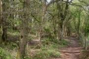 Black Hill, woodland