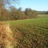Farmland and woodland edge, Nettlebed