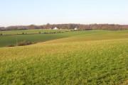 Pastures, Nettlebed