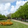 Gardens in Walpole Road